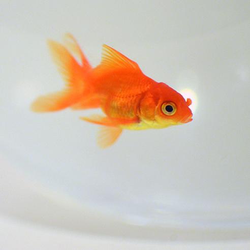 Ich habe nicht 15 Jahre auf Fleisch verzichtet, dass mir nun dieser putzige Fisch hier stirbt.